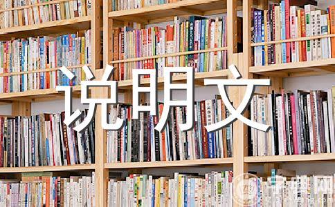 【精品】小制作500字作文(通用14篇)
