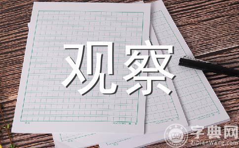 【精选】观察400字作文合集九篇
